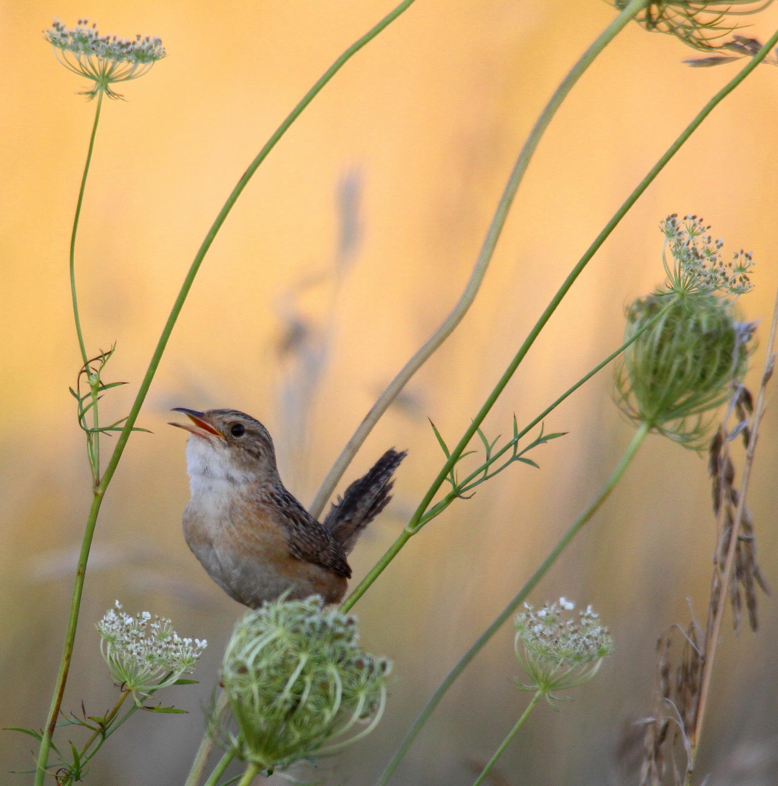 Audubon's State of the Grasslands Report a Turning Point for