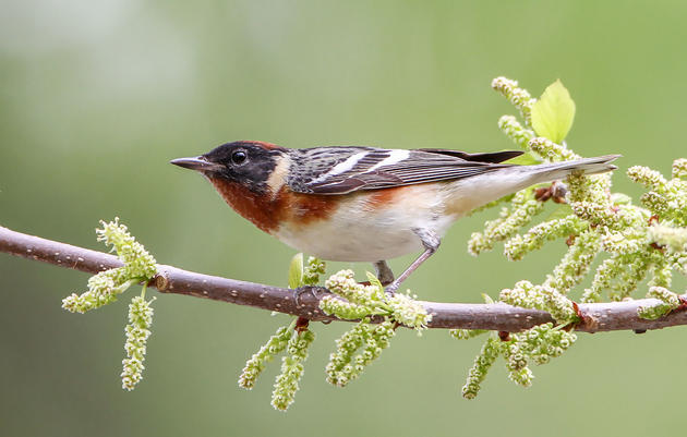 Kenn Kaufman's Backyard Is One of the Best Spots to Witness Spring Migration