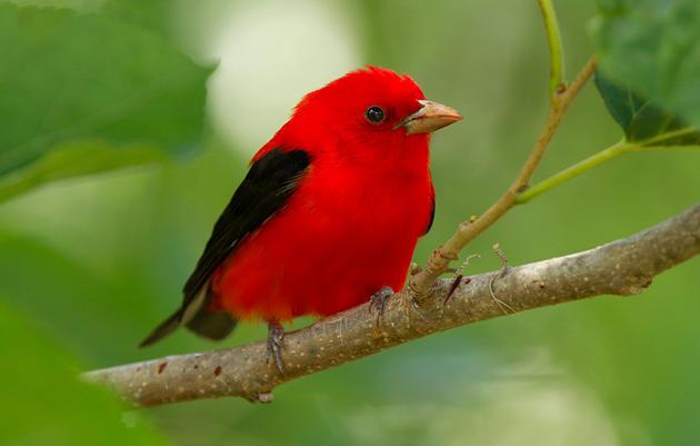 Audubon Birds & Climate Report
