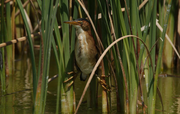 New Indiana Wetlands Law Puts Bird Habitat, Hoosiers at Risk