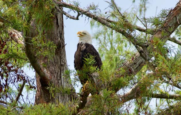 U.S. House Overwhelmingly Approves Permanent Reauthorization of Major Conservation Program