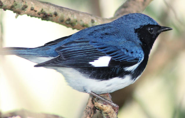 Migratory Stopover Habitat