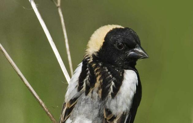 Illinois Important Bird Areas Program