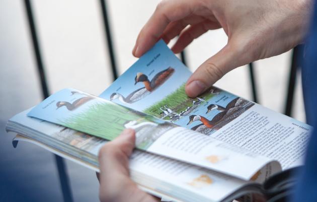Birding Basics
