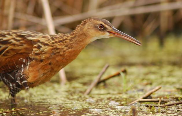 Audubon Applauds Water Quality Investment