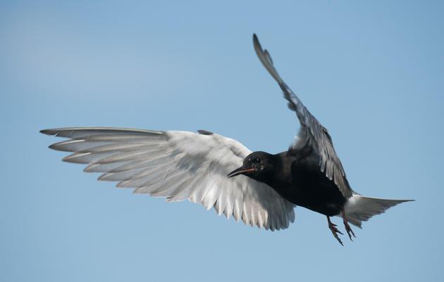 Audubon Urges EPA to Prioritize Wetlands Restoration in GLRI Action Plan III