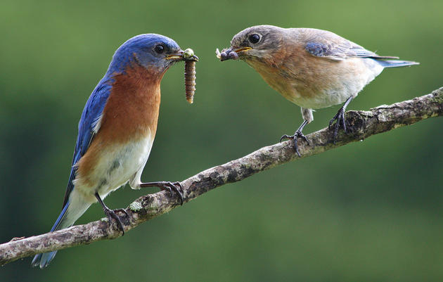 Climate Watch: Watching for Nuthatches or Bluebirds