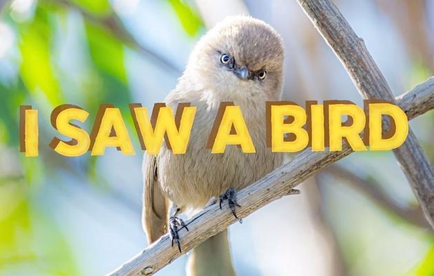 I Saw A Bird: Audubon's Spring Migration Show