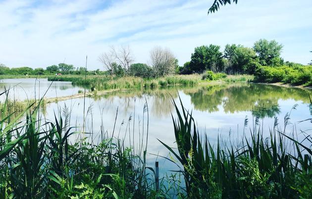 Calumet Wetlands