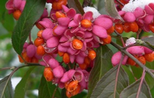 Plant Native Shrubs