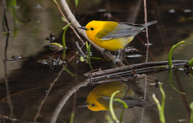 Audubon Network Comes Together to Protect Michigan's Wetlands