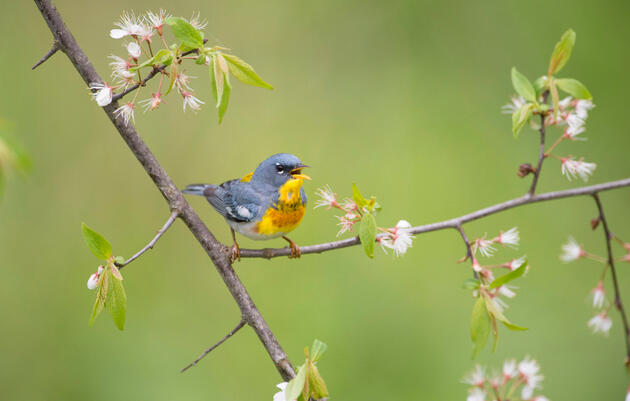 Audubon Report Shows That Important Bird Habitats are Key Natural Solutions to Climate Change