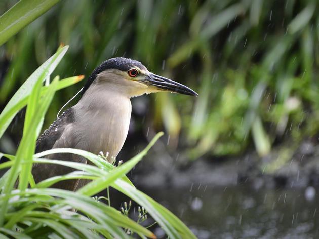 Illinois Calumet Marsh Bird Survey