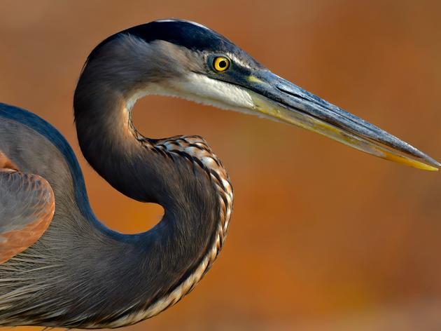 2019 Coastal Wetlands Symposium
