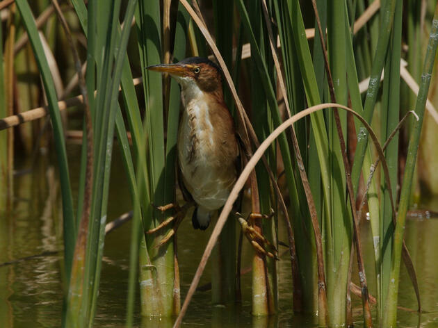 New Legislation Poses a Serious Threat to Wetlands and Bird Habitat in Indiana