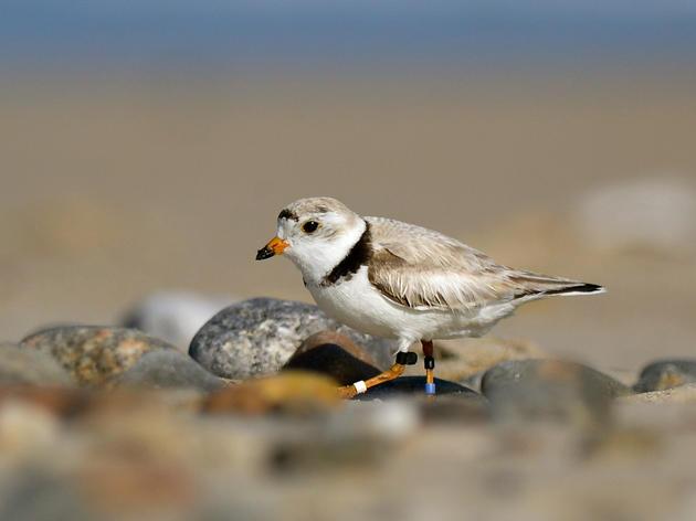 Audubon Great Lakes Responds to Proposed White House Budget
