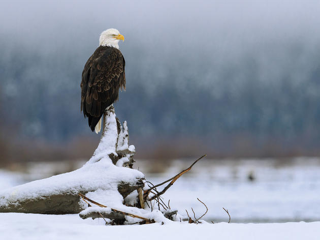 The Law That Protects Our Birds Is in Dire Threat