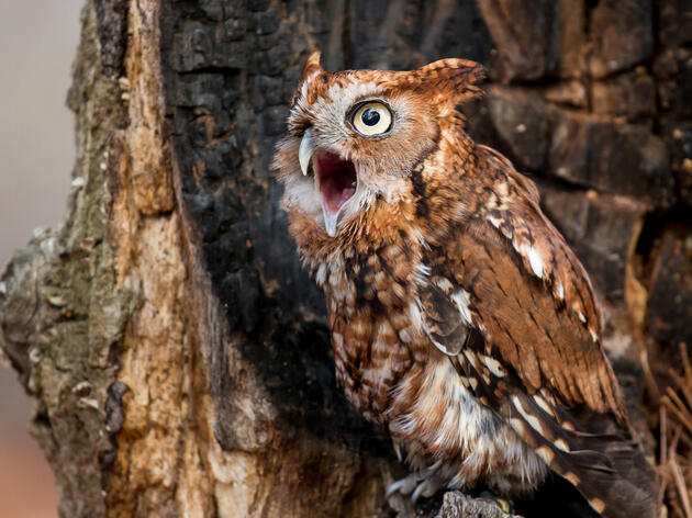 Birding Safely During Hunting Season