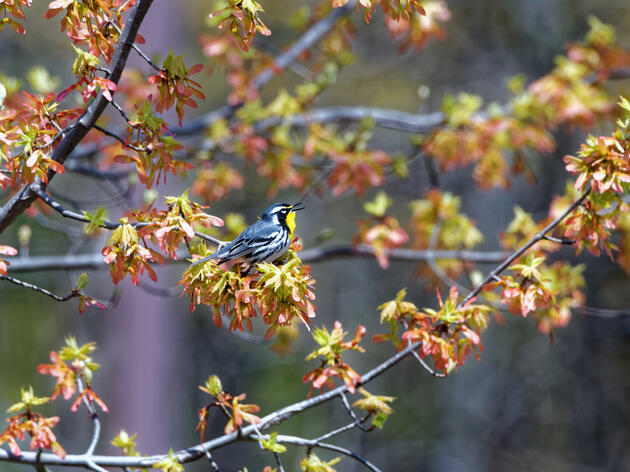 "New ""Trillion Trees"" Bill in Senate will Protect Birds While Making Progress on Climate Change"