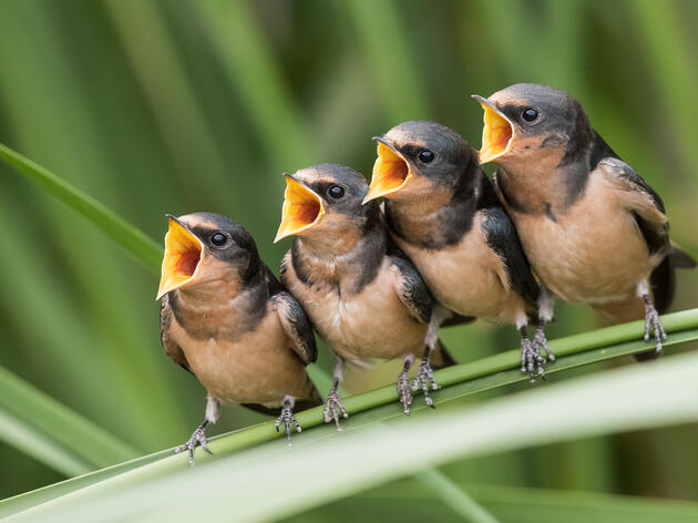 Why Do Birds Stop Singing in Late Summer?