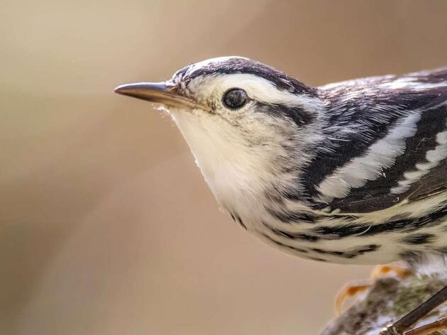 New Law Will Protect Illinois Birds From Deadly Building Collisions