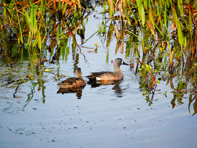 What is a Wetland? And Other Habitats Great Lakes Birds Need