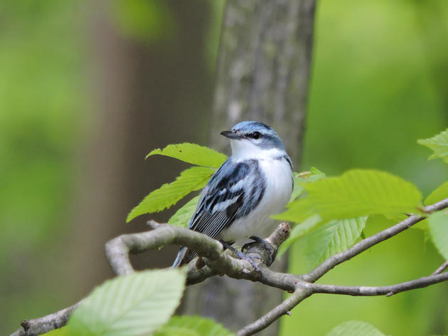 Clean Energy Jobs Act Will Provide a Cleaner, Healthier Future for Illinois Birds