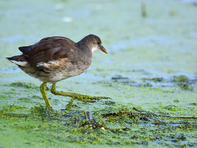 Which Great Lakes Wetlands Do Birds Need Most? Audubon Scientists Find Out