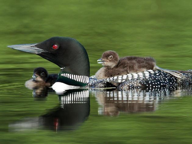 Audubon Urges Legislators to Support Knowles-Nelson Conservation Program