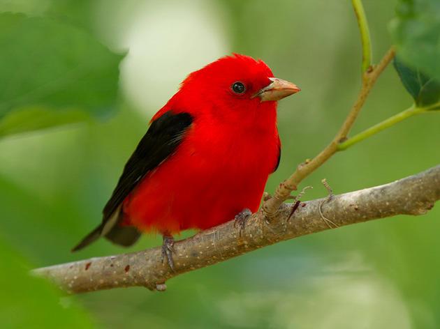Audubon Urges Ohio Senate to Oppose HB6