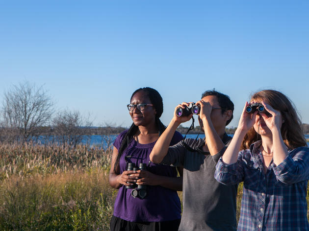 Make the Most of Fall Birding in Michigan