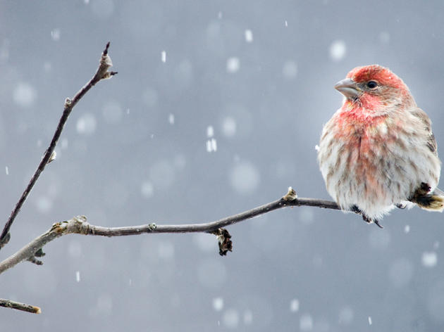 Another Round of Winter Bird Counts is on the Horizon!