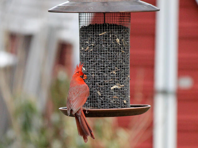 Mysterious Illness Affects Birds in Ohio and Indiana