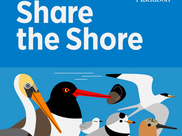 Audubon Great Lakes Reminds Beachgoers to #ShareTheShore and Look out for Birds This Summer