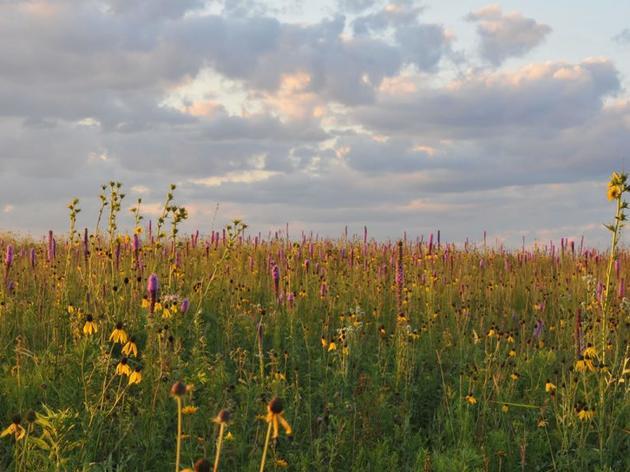 Visit Orland Grassland
