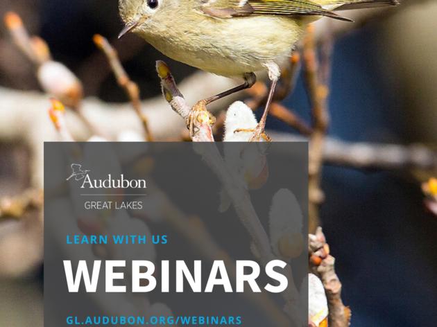 Audubon Great Lakes Webinars