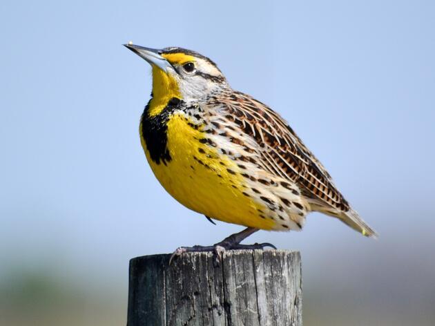 Audubon Great Lakes Celebrates Funding for the Knowles-Nelson Stewardship Program