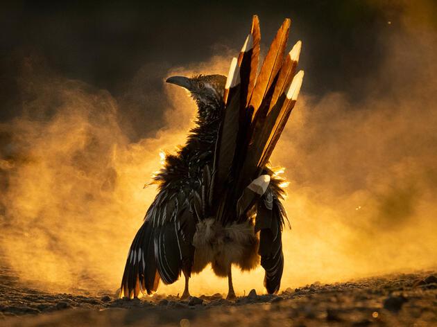 2021 Audubon Photography Awards Winners Enchant with Birdlife Imagery
