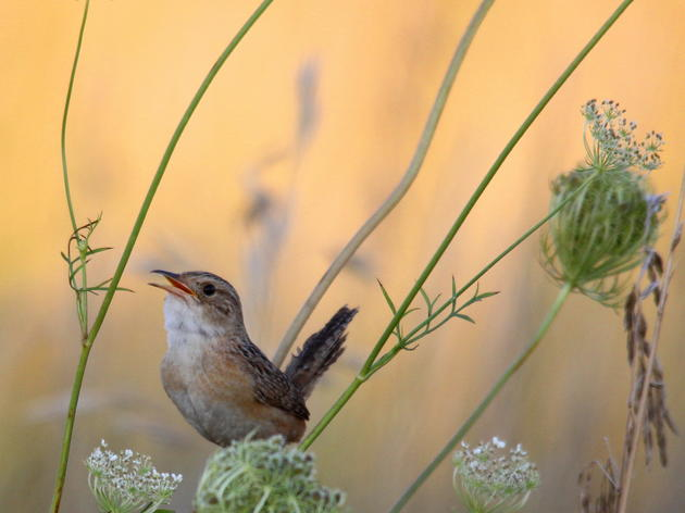 Audubon's State of the Grasslands Report a Turning Point for Grassland Bird Conservation in Illinois