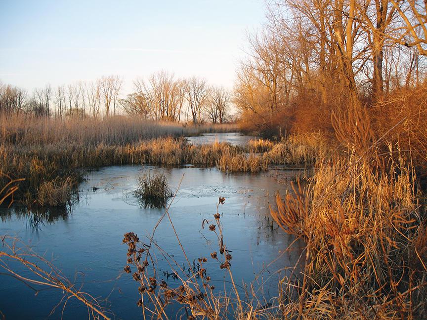 Sterling State Park, Wetlands, Conservation, Public Lands